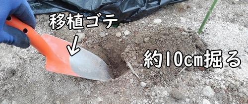 約10cm穴を掘る