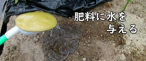 肥料に水やりをする