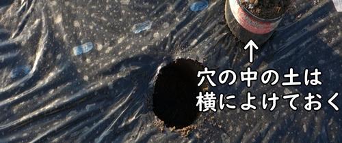 穴の中の土は横によけておく