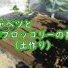 春キャベツと春ブロッコリーの育て方(土作り)
