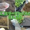 ミニ赤大根とリーフレタス用の土作り