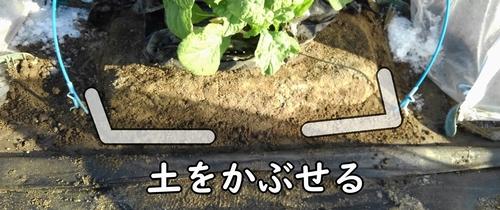 土をかぶせる