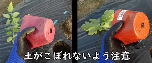 土をこぼさないように注意する