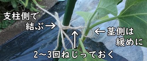 茎と支柱は麻紐で結ぶ