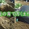 枝豆の育て方(土作り)