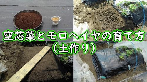 空芯菜とモロヘイヤの土作り