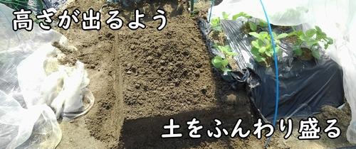 土をふんわり盛る