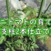 ミニトマトの育て方(支柱2本仕立て)