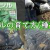 バジルの種まき