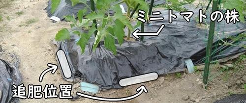 ミニトマトの追肥位置