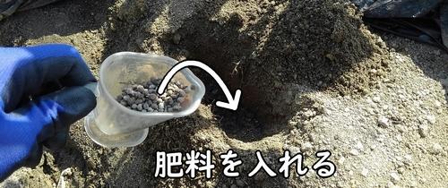 穴に肥料を入れる
