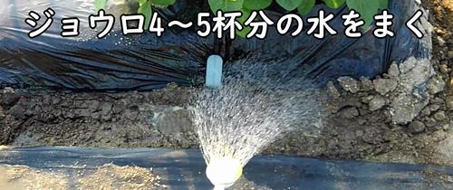 ジョウロ4~5杯分の水をまく