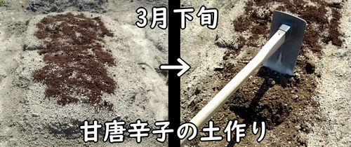 甘唐辛子の土作り