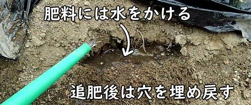 追肥した肥料には水をかける