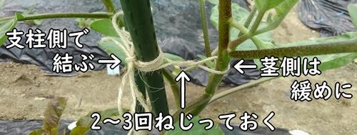 茎と支柱を麻紐で結ぶ