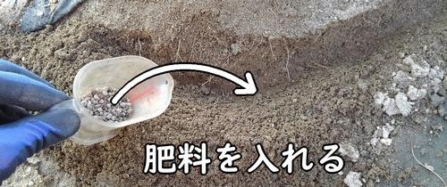 穴に鶏ふんを入れる