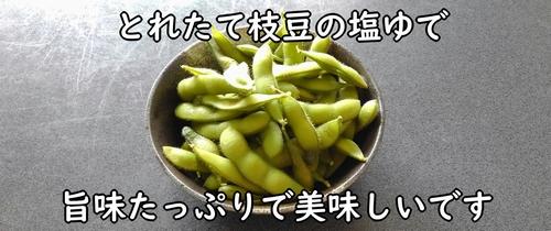 塩ゆでした枝豆