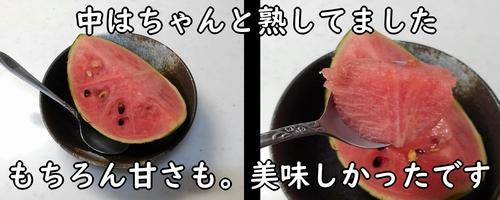収穫した小玉スイカを食べてみました