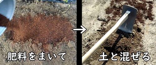 まいた肥料を土と混ぜる