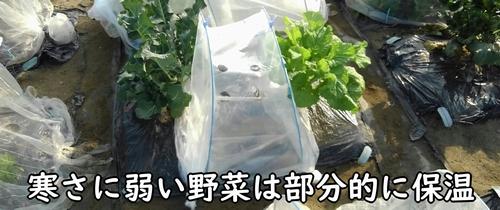 寒さに弱い野菜はトンネルで保温