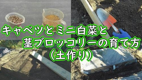 キャベツとミニ白菜と茎ブロッコリーの土作り
