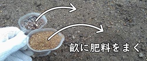 栽培区画に肥料をまく