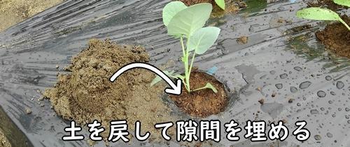 苗と穴の隙間を土で埋める