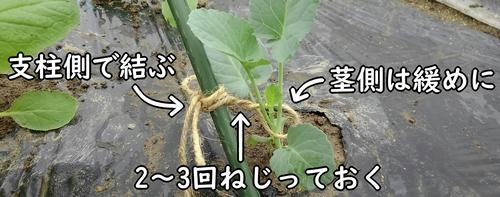 茎と支柱は紐で結ぶ