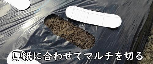厚紙に沿ってマルチを切る