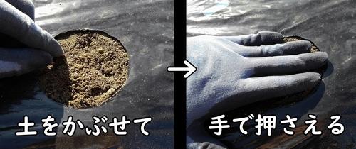 種に土をかぶせて鎮圧する